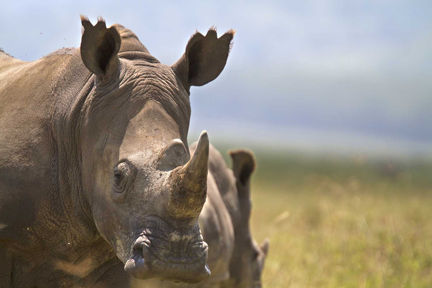 Additional funds pledged to conservation